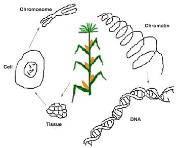 Tanya Jawab Tentang Rekayasa Genetik